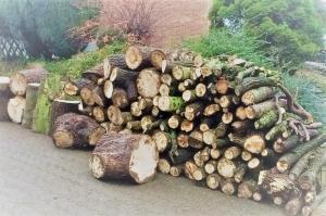 Brennholz von Buche und Kirsche Image